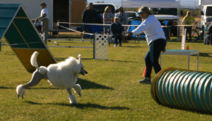 All Dogs are Athletes – Athletes Need Special Treatment for Best Performance