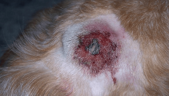 What Can I Do to Cure my Dog's Hot Spots?
