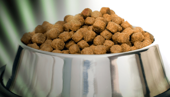 Why won't my dog lose weight? He's on low-calorie dry dog food.