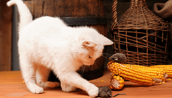 I Have a Question Concerning Grains in Cat Food. I have Heard so much about Staying away from Corn, but are all Grains Bad for Them? Wellness Complete list Deboned Chicken & Chicken Meal first then Rice & Barley next & also Flax Seed on Down the List but no Corn