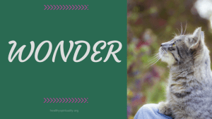An Introduction to Wonder