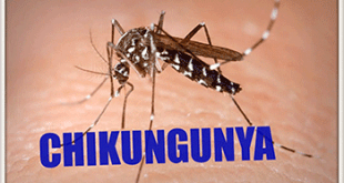Ayurvedic treatment for chikungunya