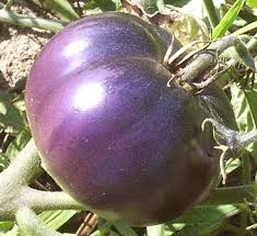 It really was purple! A Heirloom Tomato