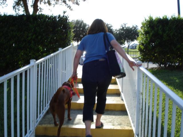 Chloe on stairs in Leesburg, Florida