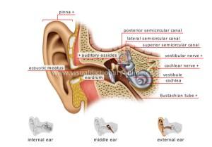 Hearing Loss Help | hearinglosshelp