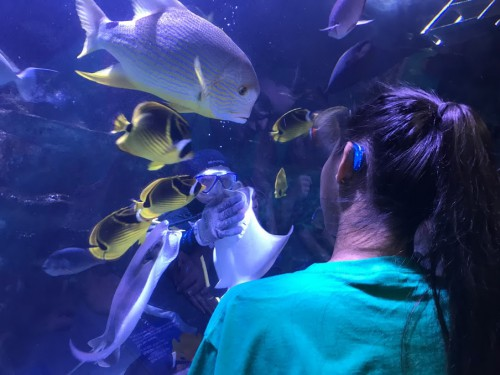 2017 Signing Summer Camp visit to The Newport Aquarium