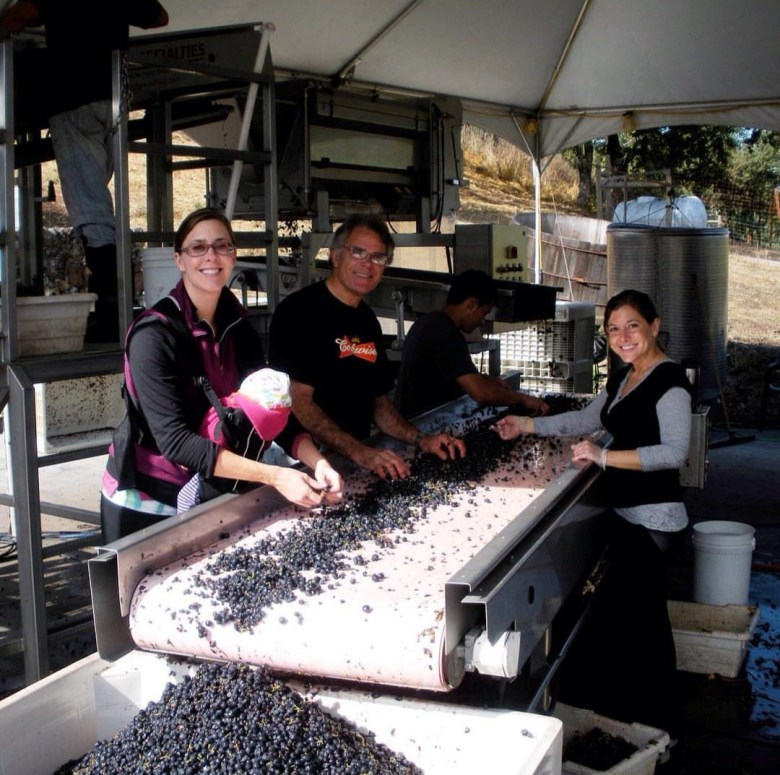 Sorting grapes during harvest in Sonoma