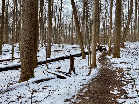 A brown, muddy trail winds through a white, snowy forest scene.