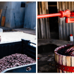 Hands-on approach to winemaking