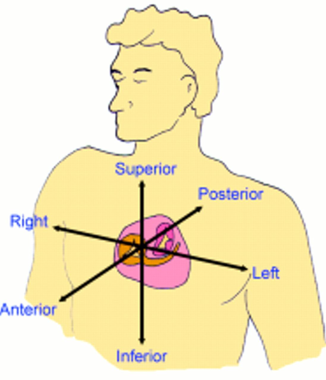 Body Planes Diagram
