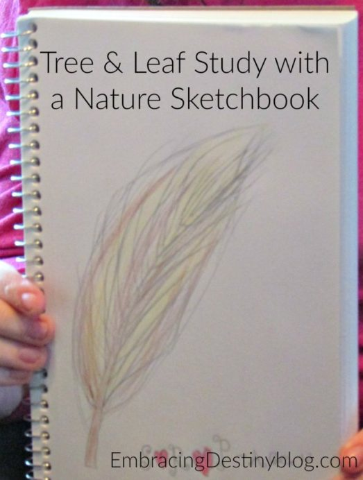 Learning about trees and leaves with Christian Kids Explore Biology at heartandsoulhomeschooling.com