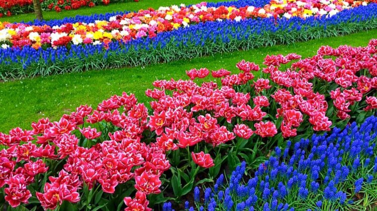 Keukenhof Holland…A Bucket List MUST!