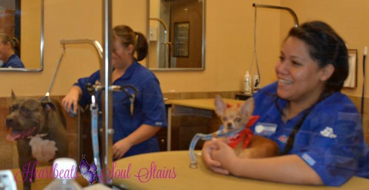 Sofia & Tatiana PetSmart Grooming