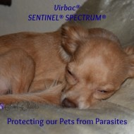 Saying Goodbye to Fleas and Tapeworms with #SENTINELSPECTRUM