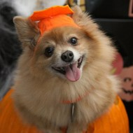 Tips to Give Your Dog a Happy Halloween