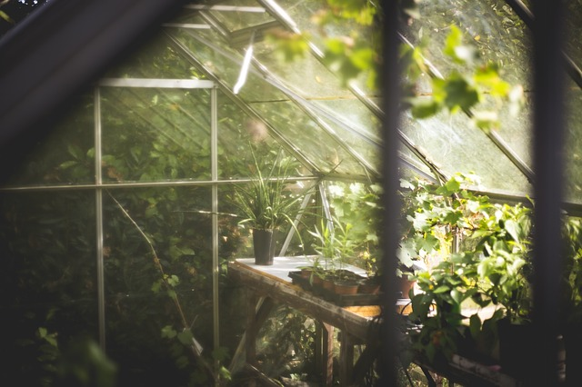 Even during the cold Winter months there is still a ton of Garden Jobs that need to get done. Here are some garden tips and tricks during the winter