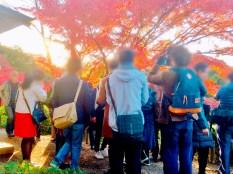 紅葉旧古河庭園〜ライトアップ六義園02
