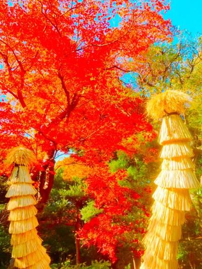 紅葉旧古河庭園〜ライトアップ六義園05