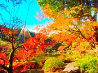 紅葉旧古河庭園〜ライトアップ六義園07