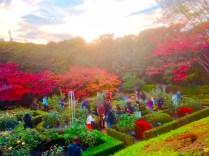 紅葉旧古河庭園〜ライトアップ六義園09