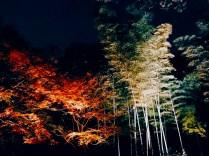 紅葉旧古河庭園〜ライトアップ六義園20