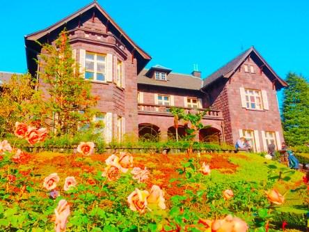 紅葉旧古河庭園〜ライトアップ六義園14