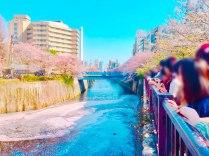目黒川桜道04
