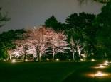 東京都庭園美術館桜05