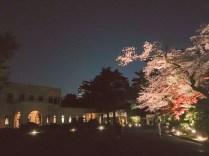 東京都庭園美術館桜03