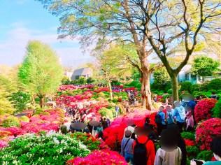 根津神社つつじ祭り05