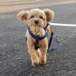 シニア期になる愛犬のペット保険を考える/オッサンと老犬の保険事情