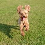 犬を飼っている人はより健康になれるという驚くべき研究結果が明らかに