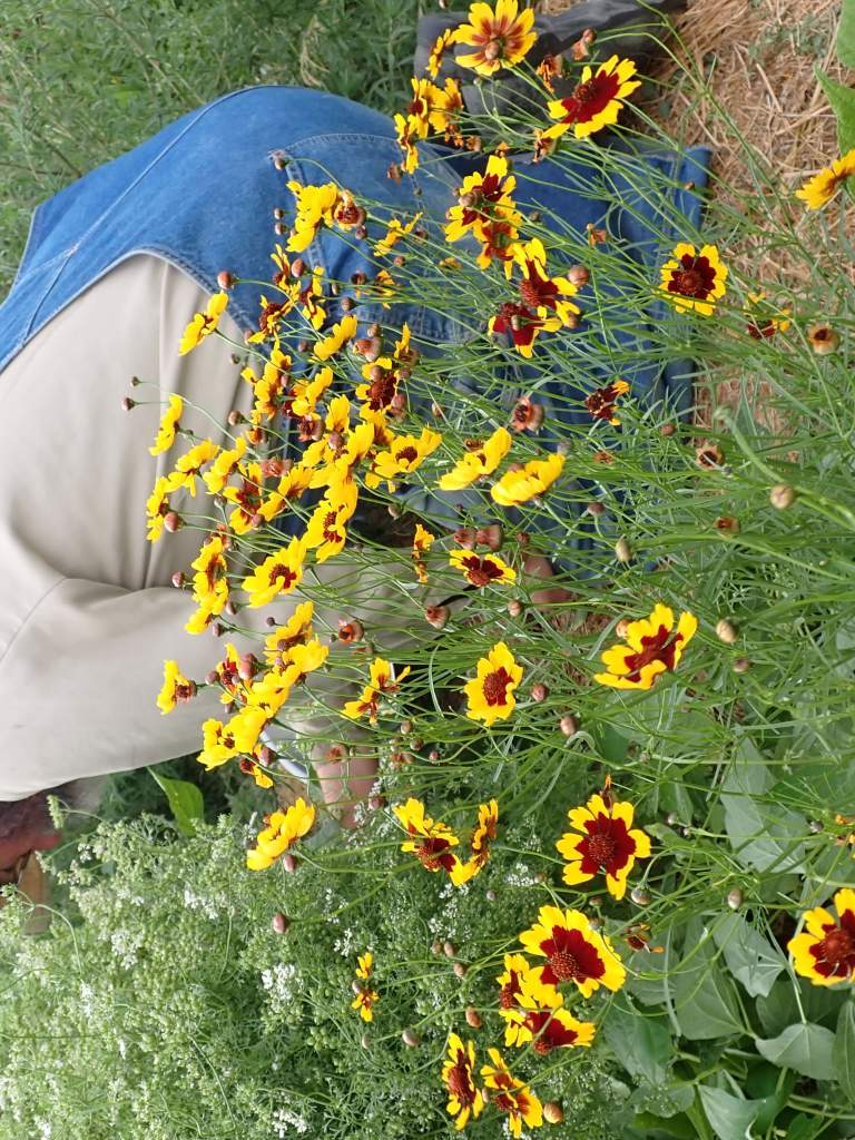 Man gardening with yellow and red flowers in foreground.