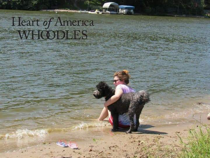 A person with a black whoodle sitting infront of a lake