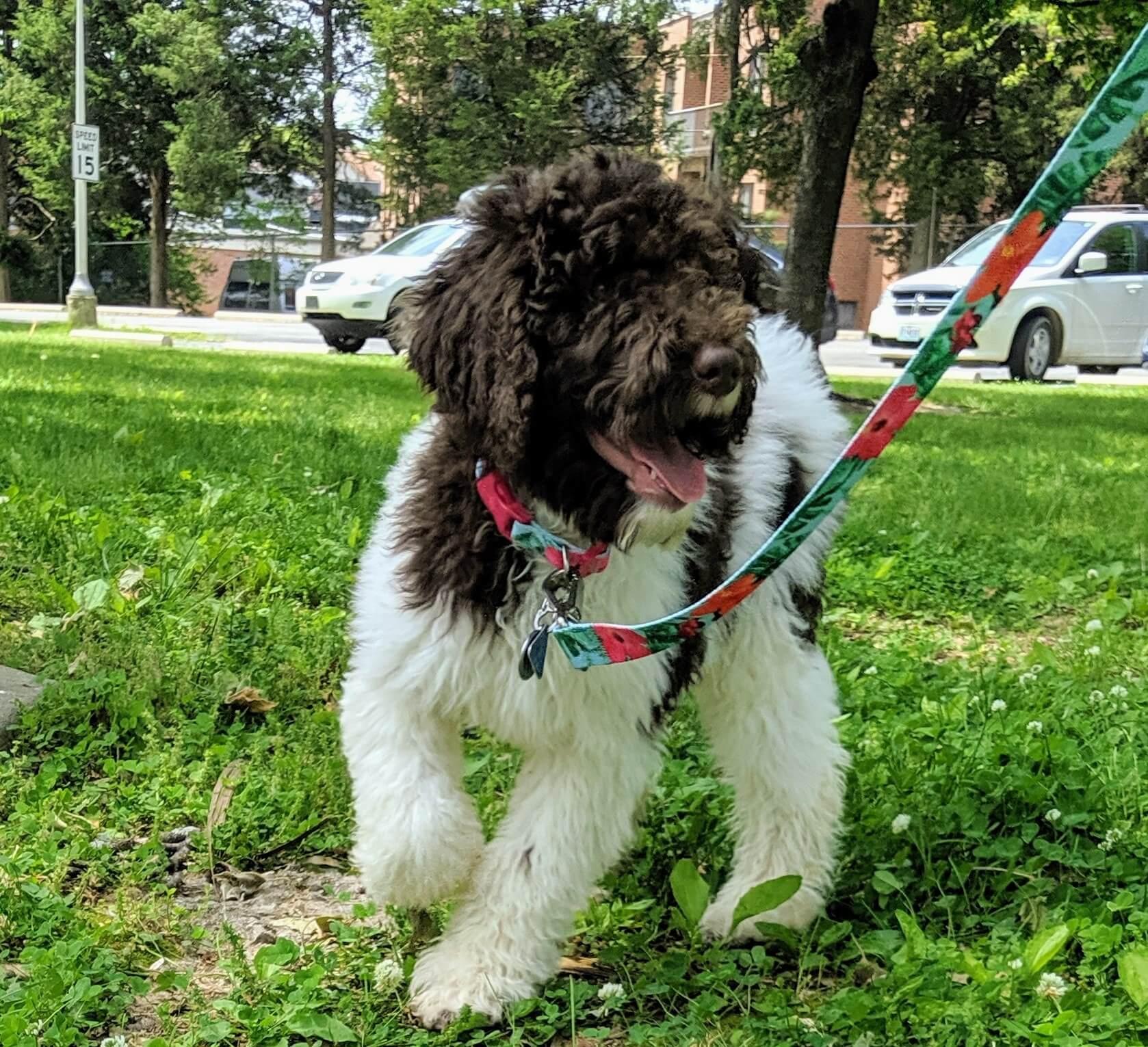 Abigail outside as a puppy