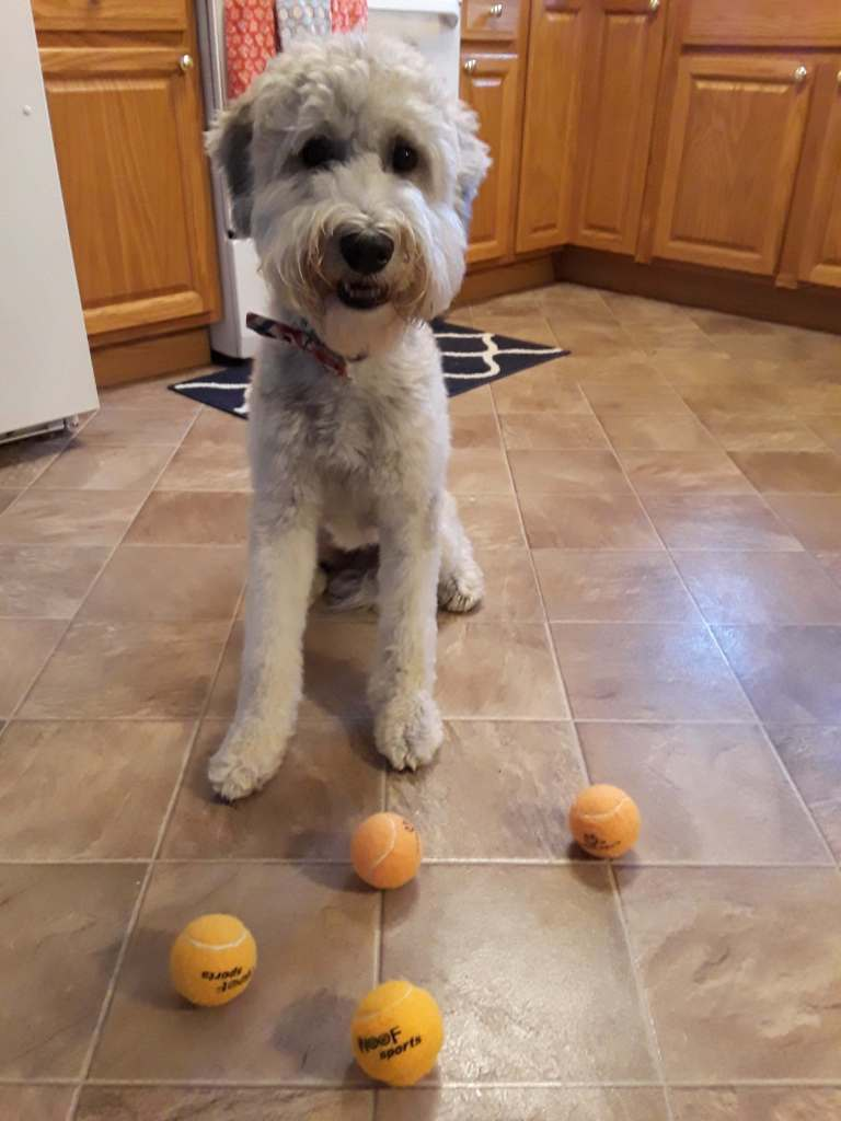 Jimmy in the kitchen with some orange tennis balls