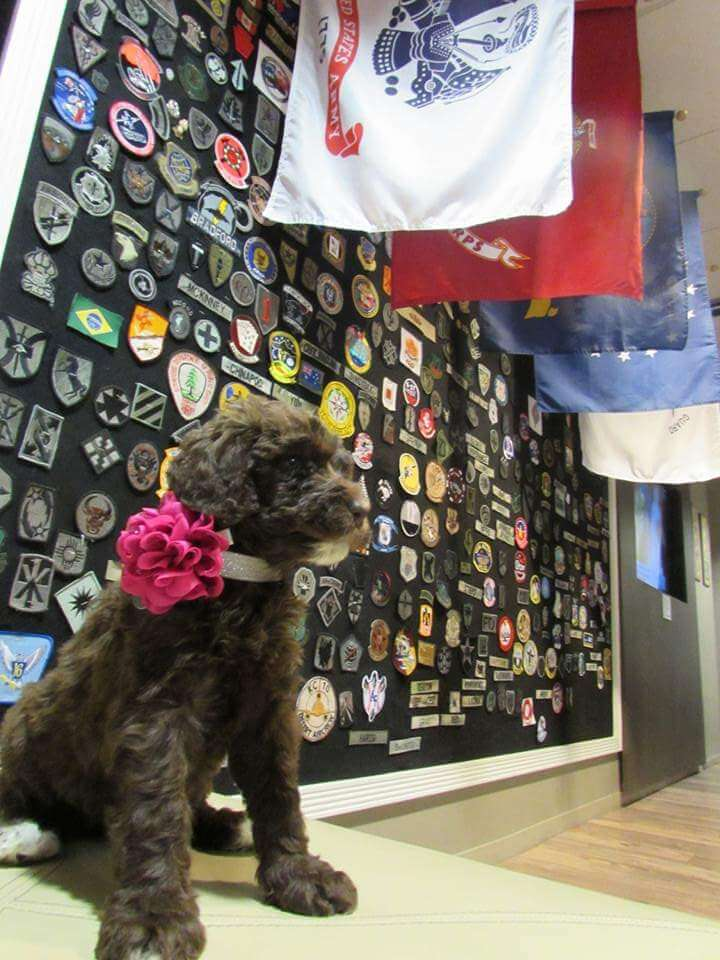 Reagan as a puppt sitting infront of a wall of badges