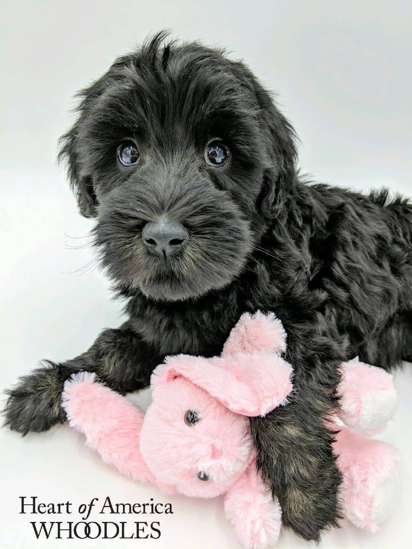 Rosie hugging a pink stuffed bunny