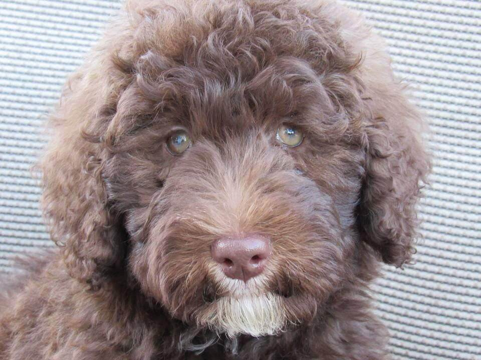 Taylor as a puppy close up