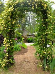 Gateway to our back patio, wish the Lady Banks would bloom forever!