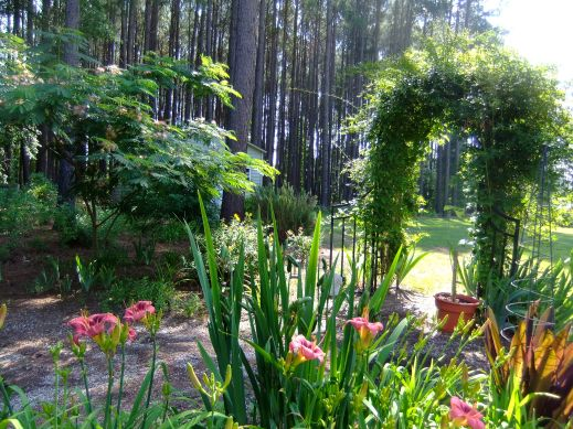 Daylilies line the path to Dora's