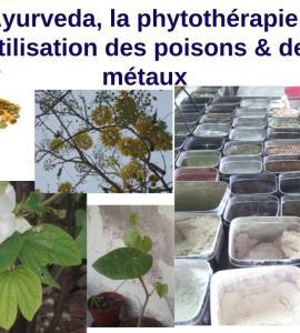 Cours bases de l'Ayurveda la phytothérapie