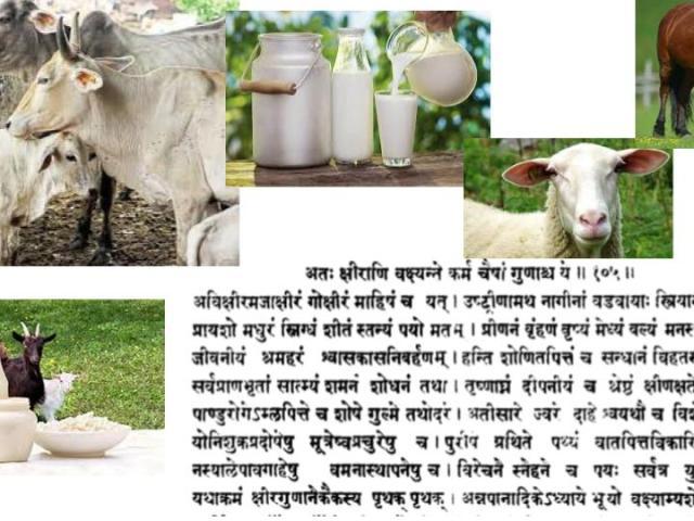 laits-Ayurveda-groupe