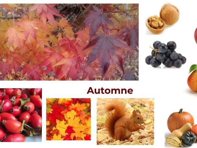 #automneayurveda #heartofayurveda #ayurveda#paris #sharat #saisonsayurveda