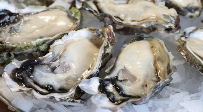🦪 Bluff Oysters Season 2020 in Auckland Central | Heart of the City