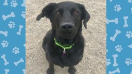 Pet of the Week: Toby