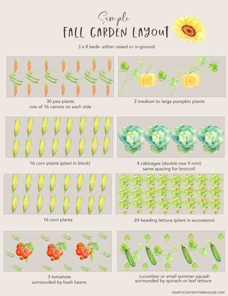 graphic with 8 sample beds showing a fall vegetable garden layout- to help with planning