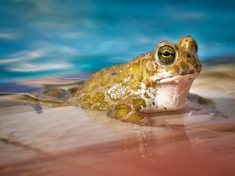kikker in water - kikker in water - narcistisch misbruik