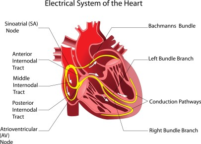 heart electrical