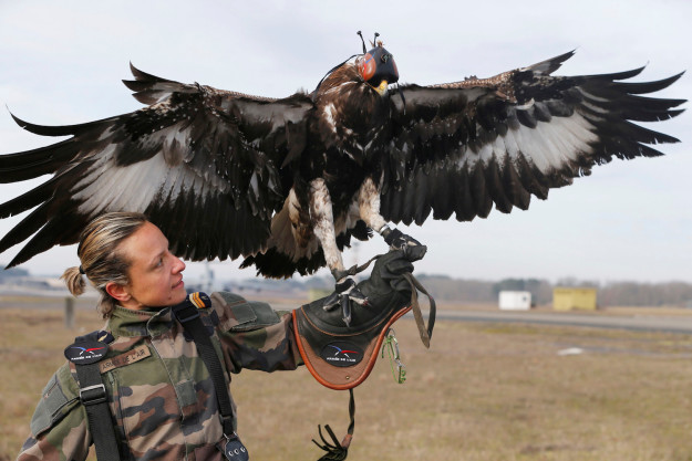 Did you know that France is training eagles to fight drones? Because they are and it's really cool and it's something about which you should know.